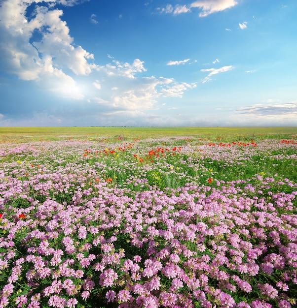 Primavera flores no prado Foto Premium