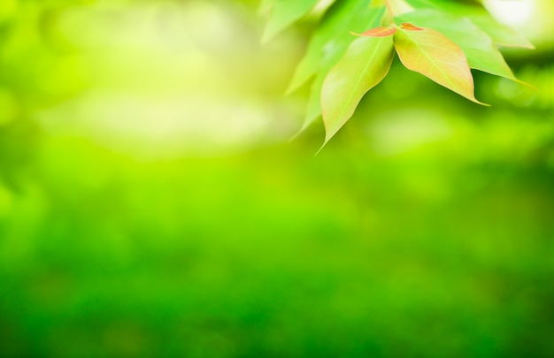 Primavera. folha verde natural na luz da manhã para o fundo e o papel de parede. natureza verde Foto Premium