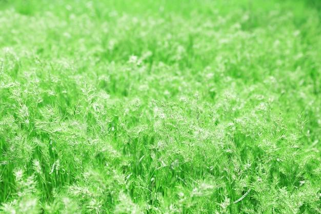 Primavera verde medow Foto Premium