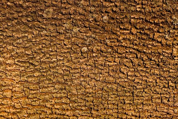 Projeto de textura de casca de árvore sem costura Foto Premium
