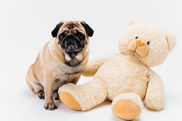 Pug adulto adorável e grande ursinho de pelúcia brinquedo Foto gratuita
