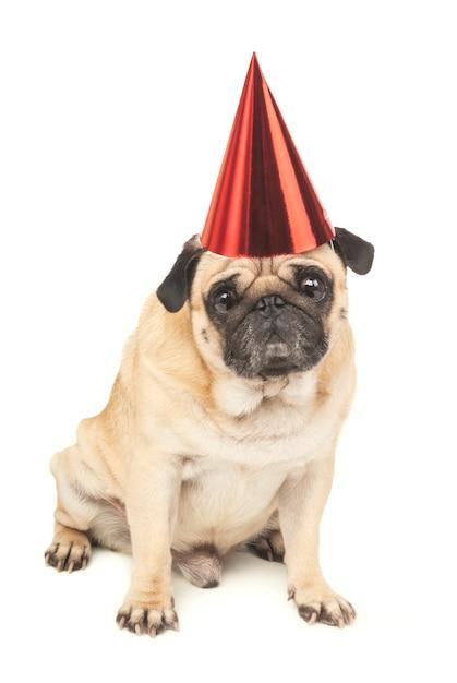 Pug com chapéu de festa Foto Premium