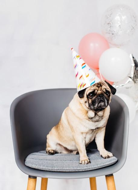 Pug em tampão festivo sentado na cadeira Foto gratuita