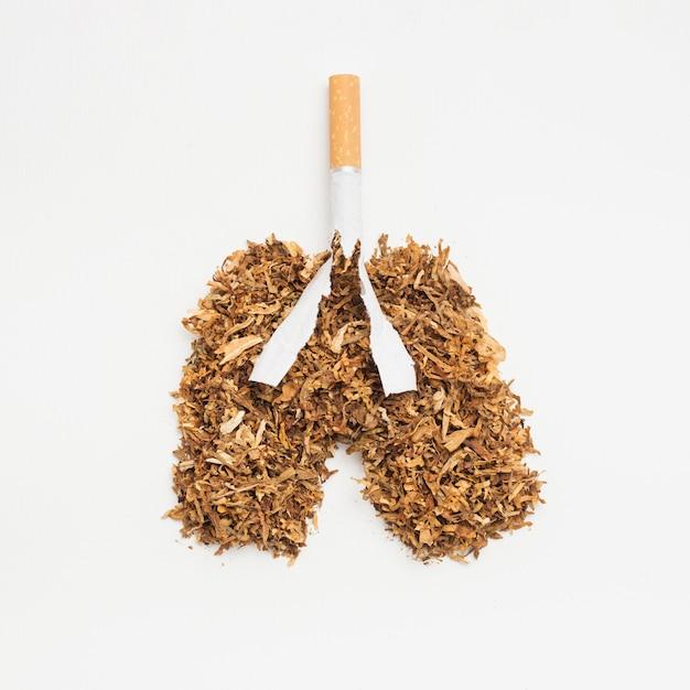 Pulmões feitos de tabaco e cigarro em pano de fundo branco Foto gratuita