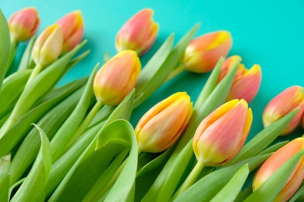 Quadro com tulipas vermelhas-amarelas frescas em um fundo de hortelã. conceito de dia internacional da mulher, dia das mães, páscoa Foto Premium