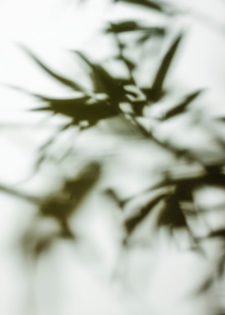 Quadro completo de fundo desfocado de folhas Foto gratuita