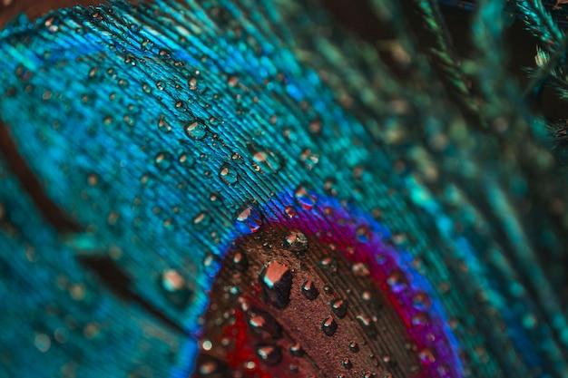 Quadro completo de gotículas de água na pluma de pavão colorido Foto gratuita