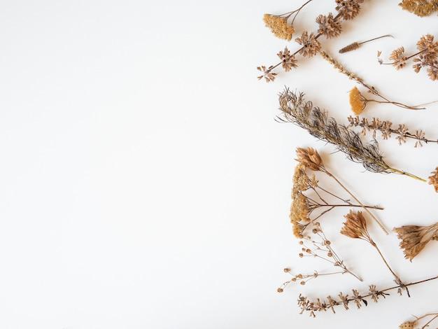 Quadro de outono de diferentes plantas e flores secas em fundo branco. vista do topo. postura plana. copie o espaço Foto Premium