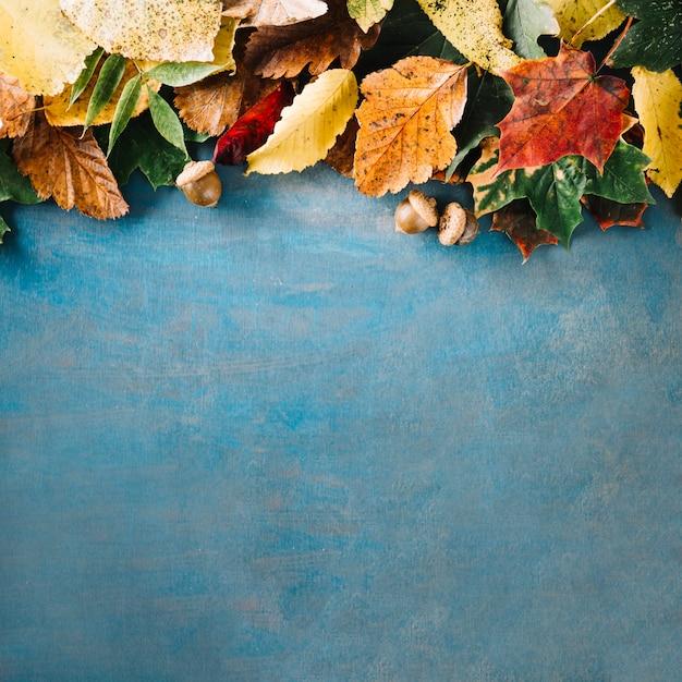 Quadro-negro com arranjo de folhas Foto gratuita