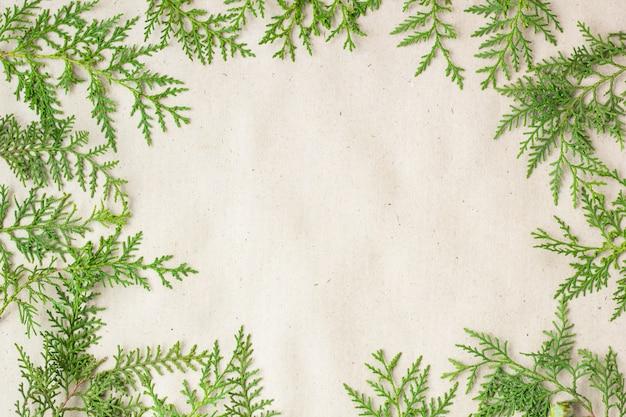 Quadro verde dos galhos de árvore do thuja no fundo rústico bege. Foto Premium