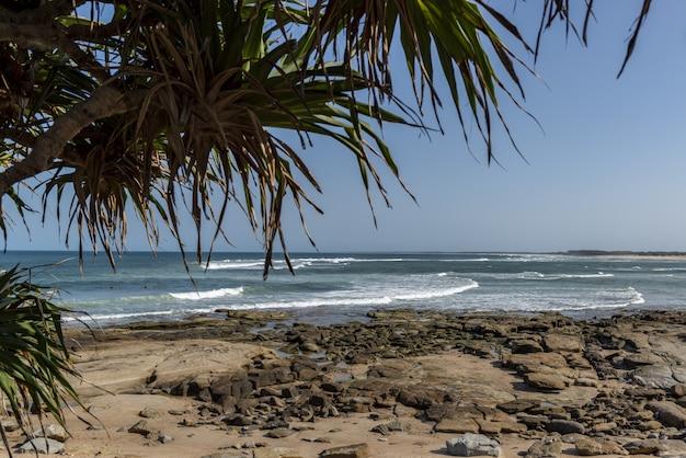 Quadros de palmeira que acontecem ondas rochas Foto gratuita