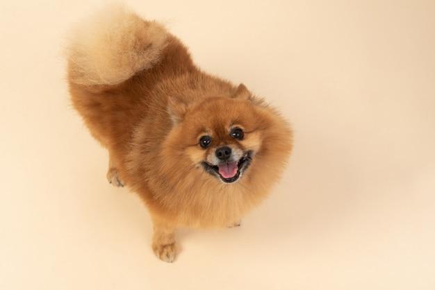 Que animal de estimação fofo Foto Premium
