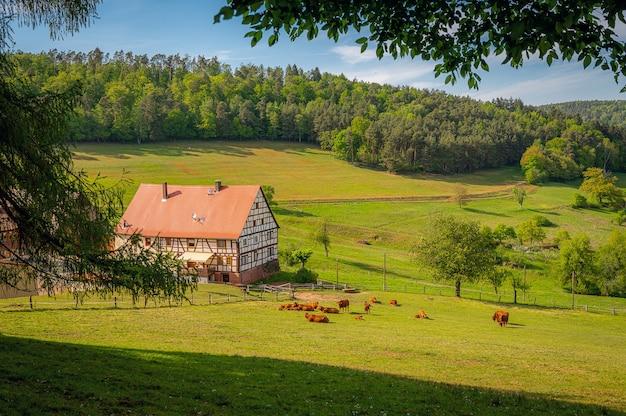 Que região linda, o odenwald Foto gratuita
