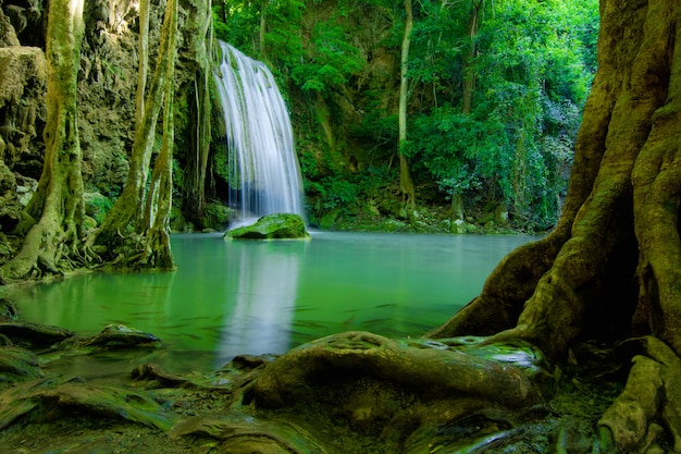 Queda de água na floresta verde Foto Premium