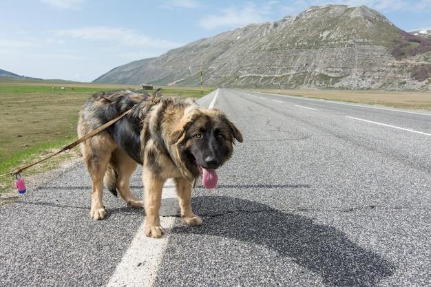 Raça misturada na estrada na montanha Foto Premium