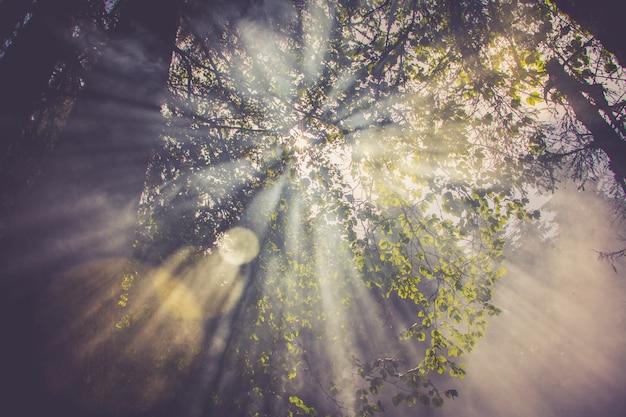 Raios de sol atravessam o nevoeiro ou fumaça entre folhas verdes na floresta Foto Premium