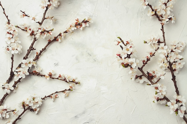 Raminho de flores de cerejeira sobre uma superfície de pedra clara. vista plana, vista superior Foto Premium