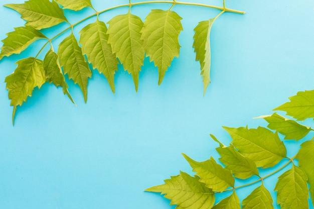 Raminho de folhas em um azul Foto Premium
