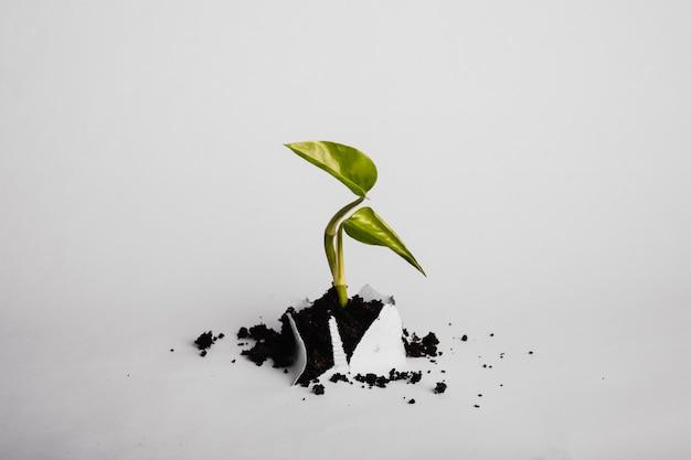 Raminho de planta crescendo através de papel Foto gratuita