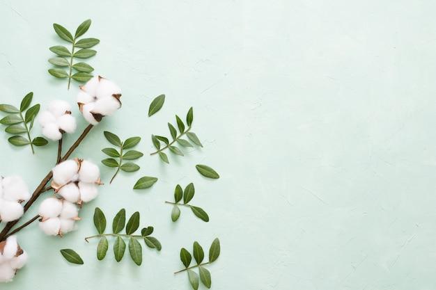 Ramo de algodão e folhas verdes sobre fundo verde claro Foto gratuita