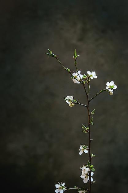 Ramo de flor de primavera Foto Premium