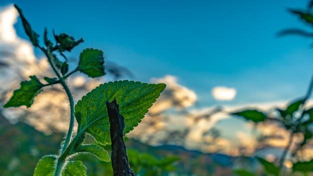 Ramo de folhas verdes Foto Premium
