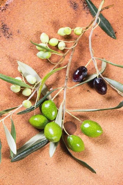 Ramo de oliveira verde e preto Foto Premium