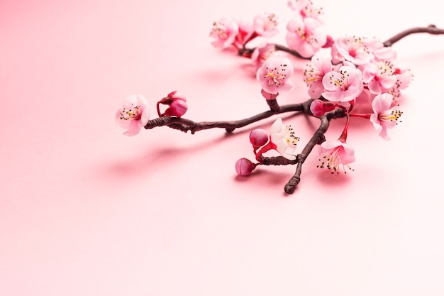 Ramo de sakura em rosa Foto Premium