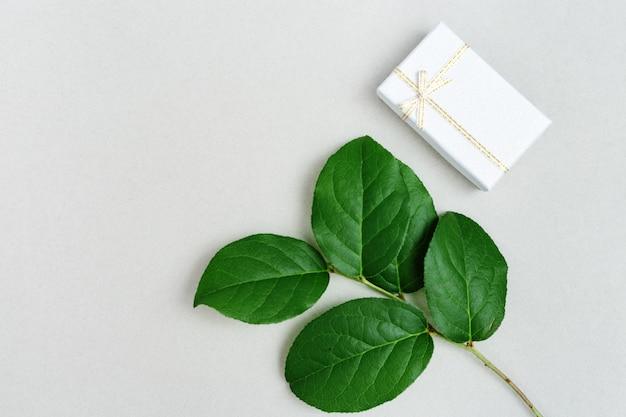 Ramo natural da planta com folhas verdes e caixa de presente pequena Foto Premium