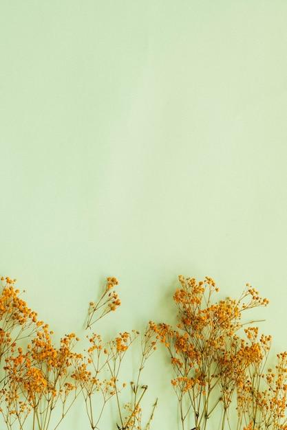 Ramos amarelos de gypsophilia paniculata em fundo verde suave Foto Premium