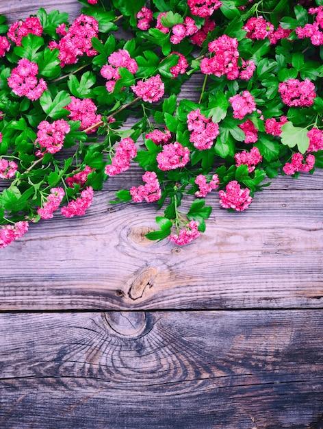 Ramos de espinheiro floração com flores vermelhas Foto Premium