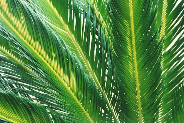 Ramos de palmeira tropical de verão close up Foto gratuita