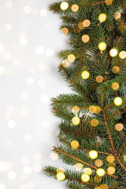 Ramos de pinheiro verde fresco natural com luzes bokeh Foto Premium
