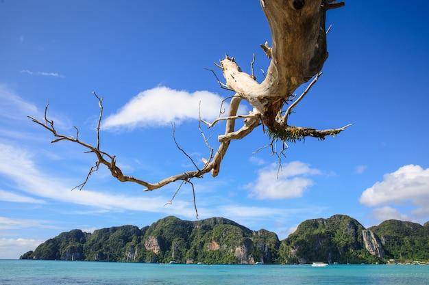 Ramos mortos estendidos para o mar e a montanha de rocha com fundo de céu azul Foto Premium