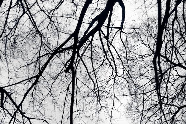 Ramos negros Foto gratuita