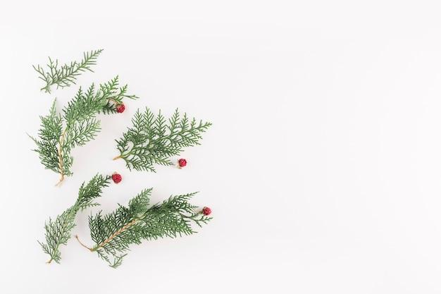 Ramos verdes de coníferas com pequenas flores vermelhas Foto gratuita