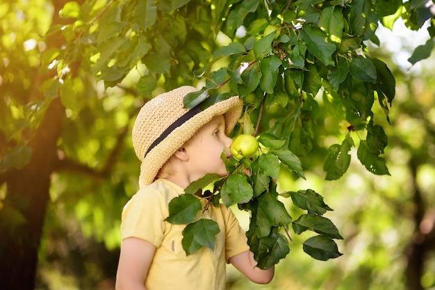 Rapaz pequeno que escolhe maçãs da árvore. Foto Premium