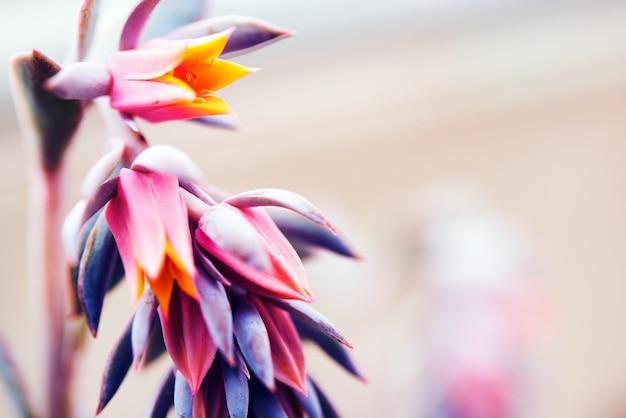 Rare tropical flower Foto gratuita