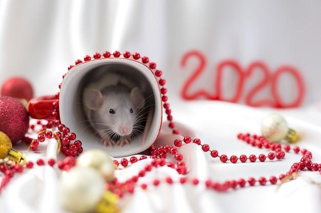 Rato branco senta-se em copo vermelho entre as decorações de ano novo, ao lado de inscrição vermelha 2020 Foto Premium