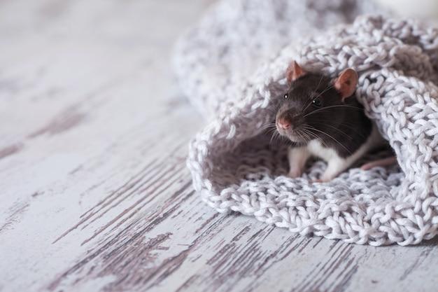 Rato de natal símbolo do ano novo 2020. ano do rato. Foto Premium