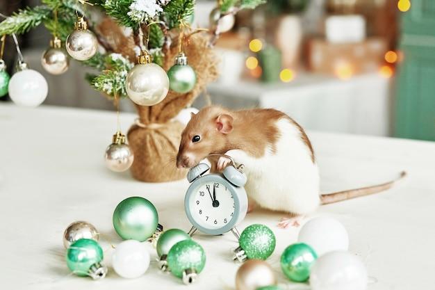 Rato de natal símbolo do novo ano de 2020. ano do rato. ano novo chinês 2020. brinquedos de natal, bokeh. rato no fundo das decorações de natal. modelo de cartão de natal ano novo Foto Premium