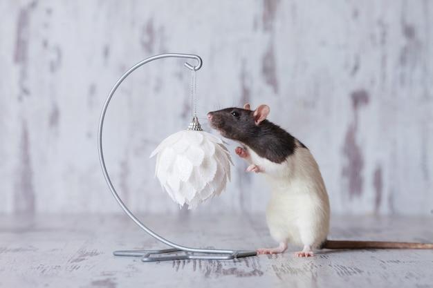Rato de natal símbolo do novo ano de 2020. ano do rato. ano novo chinês 2020. copyspace Foto Premium
