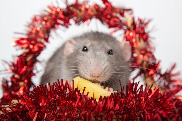 Rato encantador dumbo em uma cesta com decorações de natal Foto Premium