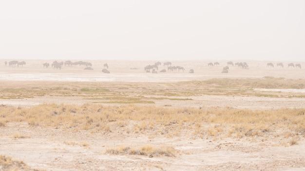 Rebanho de antílopes pastando na panela do deserto. tempestade de areia e nevoeiro. safari da vida selvagem no parque nacional etosha, famoso destino de viagem na namíbia, áfrica. Foto Premium