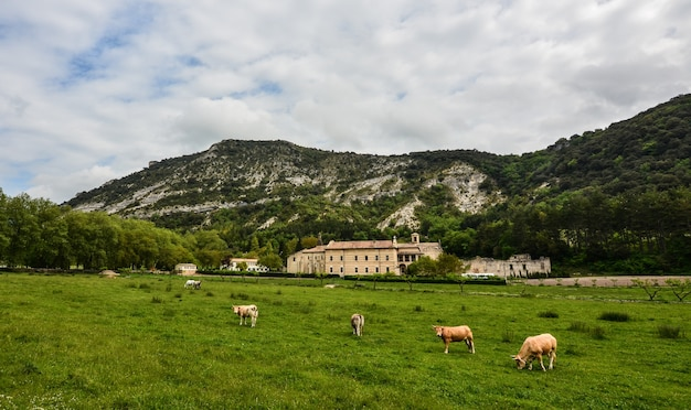 Rebanho de vacas pastando no pasto cercado por altas montanhas rochosas Foto gratuita