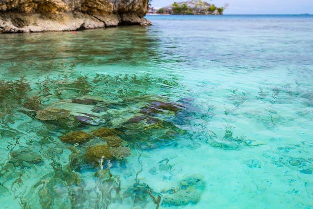 Recife de corais próximo acima na água transparente de turquesa do mar tropical. Foto Premium