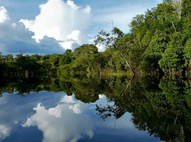 Reflexões do rio amazonas, brasil Foto Premium