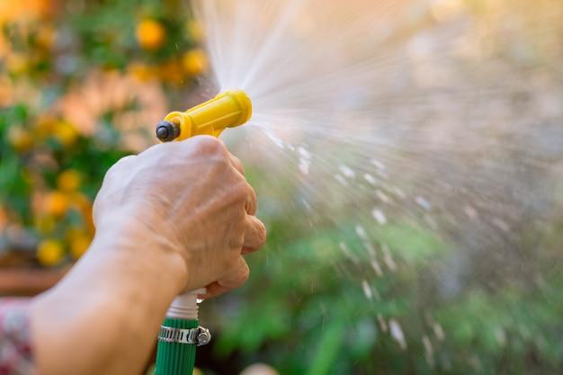 Rega jardim mulheres idosas mão segure spray de água a árvore no parque Foto Premium