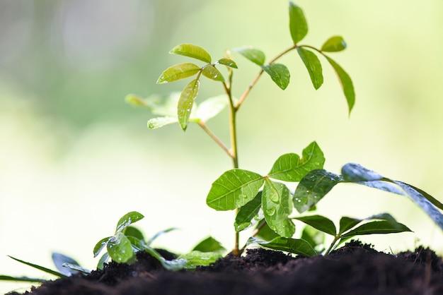 Rega, planta, crescendo, com, plantar árvore, ligado, solo natureza, verde, jardim, e, gota dágua, ligado, folhas Foto Premium