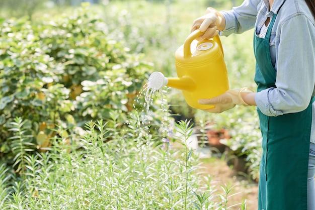 Regar as plantas no jardim Foto gratuita